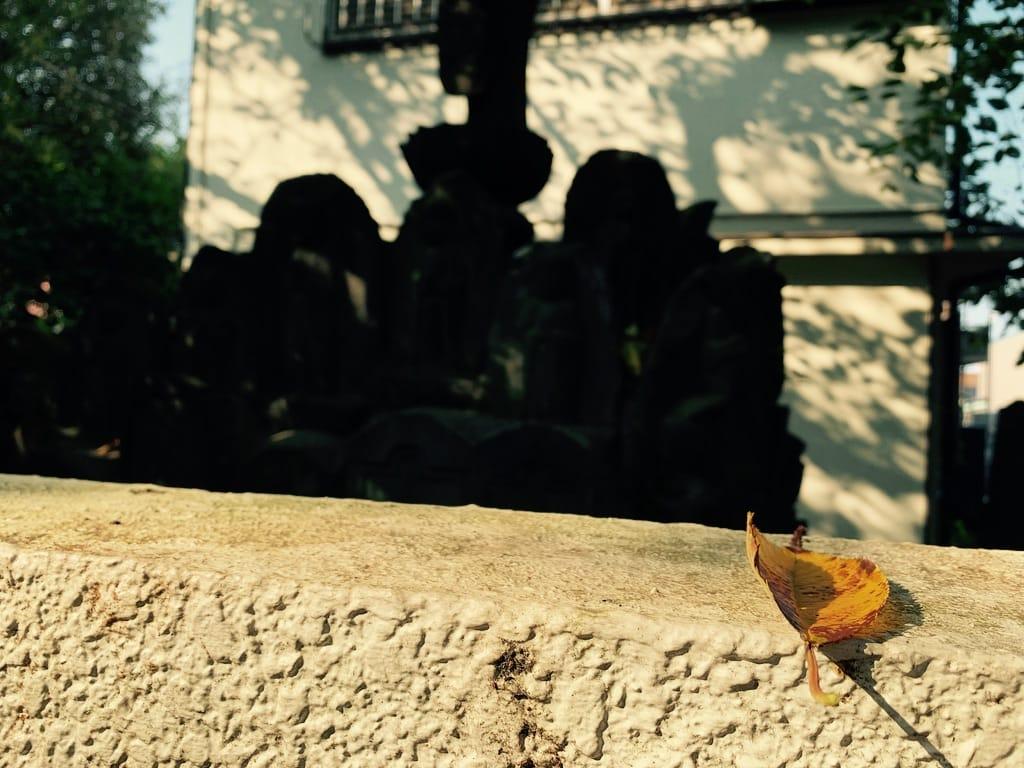 feuille posée sur un mur, sanctuaire dans l'ombre.